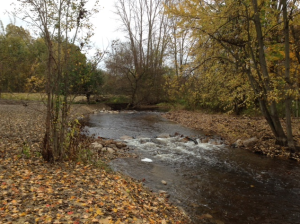 Looking upstream on the Coldwater River three weeks after removing the Freeport Dam. (October 2014)