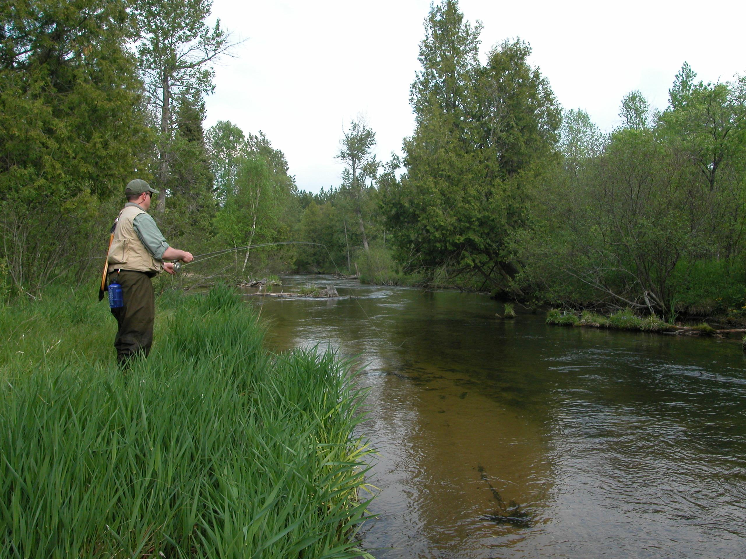 Deward Tract - Manistee River - Schrems West Michigan Trout