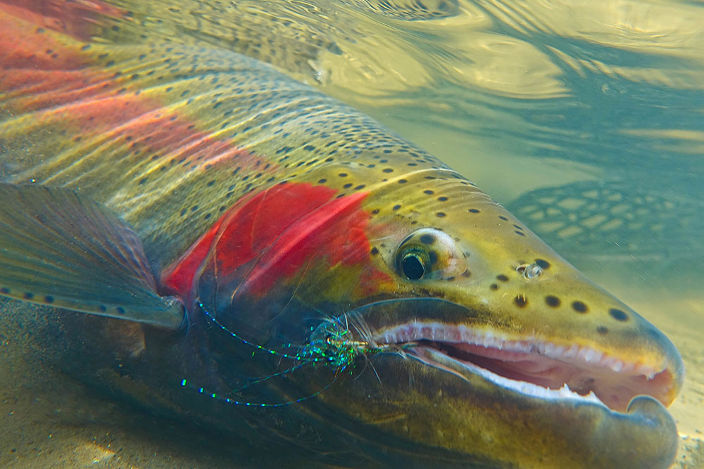 February seminar with Kevin Feenstra - Schrems West Michigan Trout Unlimited