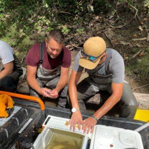 Coldwater River trout survey